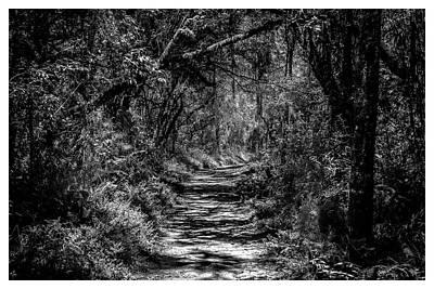 Photograph - Trilha-horto-parque Estadual-campos Do Jordao-sp by Carlos Mac