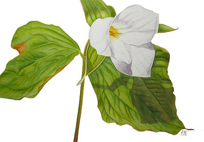 Wall Art - Painting - Trillium  by Kristina Spitzner