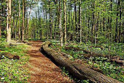 Photograph - Trillium Trail by Debbie Oppermann