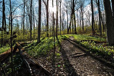 Photograph - Trillium Trail by Matt Molloy