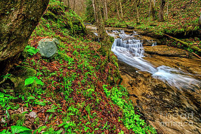 Photograph - Trillium Waterfall Anthony Creek by Thomas R Fletcher