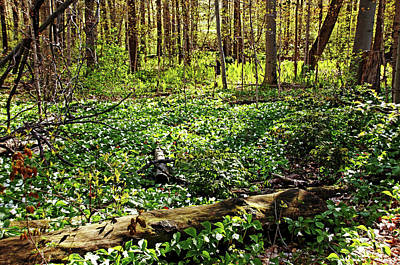 Photograph - Trillium Woods by Debbie Oppermann