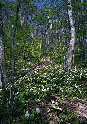 Photograph - Trillium Woods No. 2 by James Rasmusson