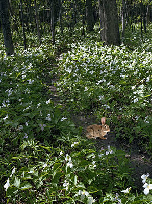 Photograph - Trillium Woods No. 3 by James Rasmusson