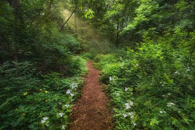 Photograph - Trillium Woods by Robin-Lee Vieira
