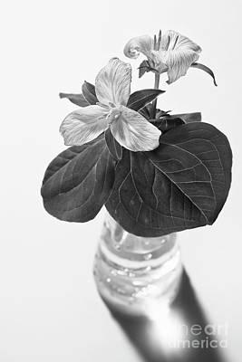 Trilliums In A Vase  Art Print by Masako Metz