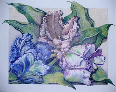 Prismacolor Painting - Trilogy by Joyce Hutchinson