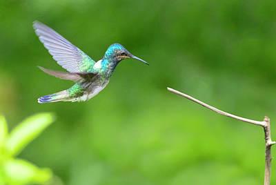 Photograph - Trinidad And Tobago Hummingbird by Nadia Sanowar