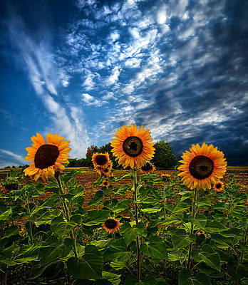 Natur Photograph - Trinity by Phil Koch
