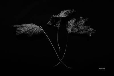 Photograph - Trinity by Randi Grace Nilsberg