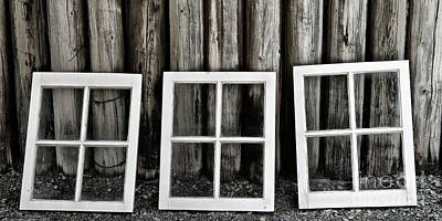 Photograph - Trio by Brad Allen Fine Art