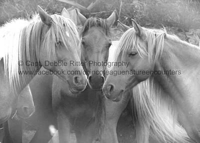 Photograph - Trio by Captain Debbie Ritter