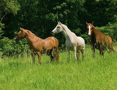 Horses Photograph - Trio In Spring by Michael Barry