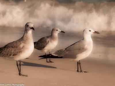 Photograph - Trio  by Kim Loftis
