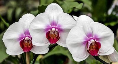 Photograph - Trio Of Beautiful Flowers by Bob Slitzan