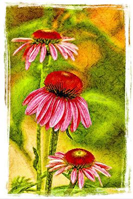 Trio Of Cone Flowers Art Print by Geraldine Scull