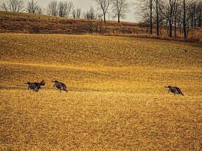 Photograph - Triple Gobble by Dale Kauzlaric