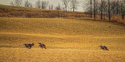 Photograph - Triple Gobble Panorama by Dale Kauzlaric