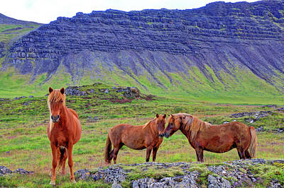 Art Print featuring the photograph Triple Horses by Scott Mahon