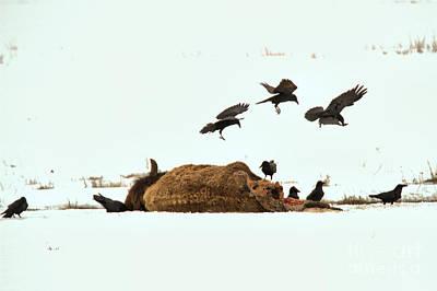Photograph - Triple Landing by Adam Jewell