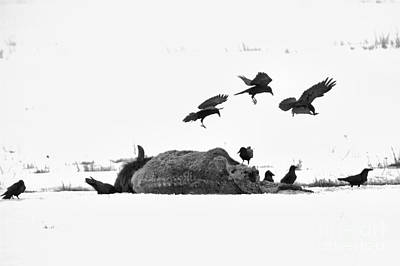 Photograph - Triple Landing Black And White by Adam Jewell