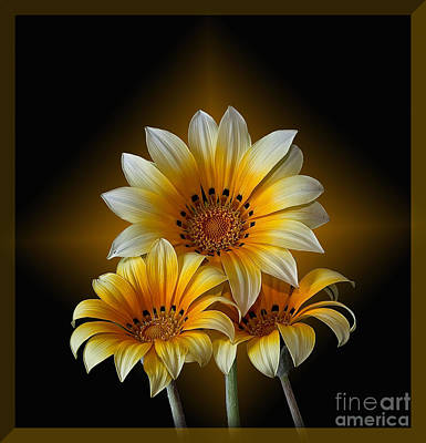 Photograph - Triple Sunshine Black And Gold by Shirley Mangini
