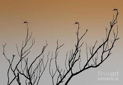 Photograph - Triple Take by Terri Mills