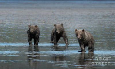 Photograph - Triple Trouble - Alaska by Sandra Bronstein