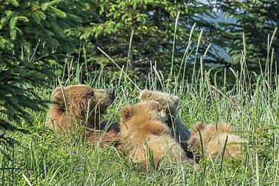 Photograph - Triplet Bear Cubs Nursing, No. 2 by Belinda Greb