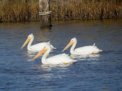 Photograph - Triplets by Sandra Reeves