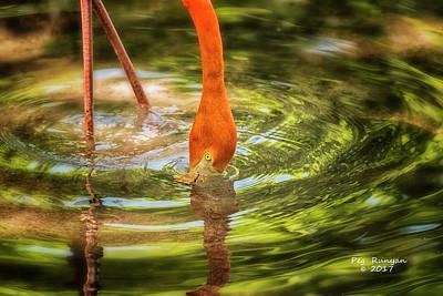 Photograph - Tripod by Peg Runyan
