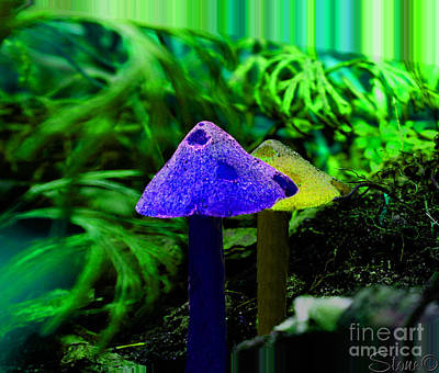 Photograph - Trippy Shroom by September  Stone