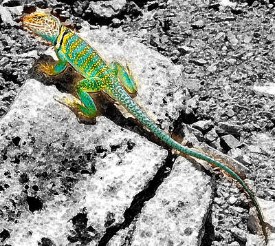 Photograph - Trippyguana by Kevin Munro