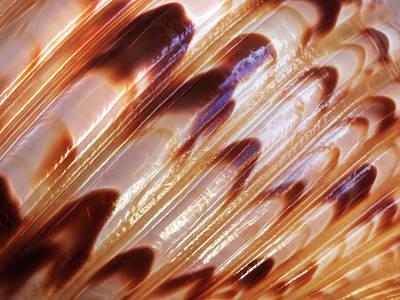 Photograph - Triton Seashell Abstract by Gill Billington
