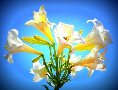 Photograph - Triumphant  Easter Lilies by Karen J Shine
