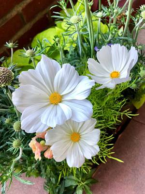 Photograph - Triune White Flowers by Renee Marie Martinez