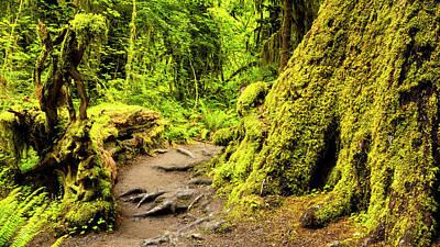 Op Art Photograph - Troll Trail by Stephen Stookey