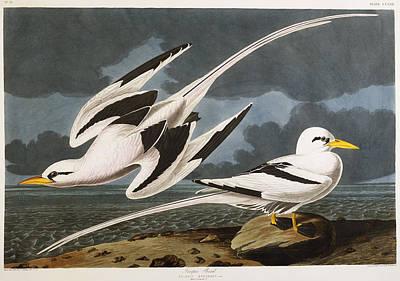 With Hands Painting - Tropic Bird by John James Audubon