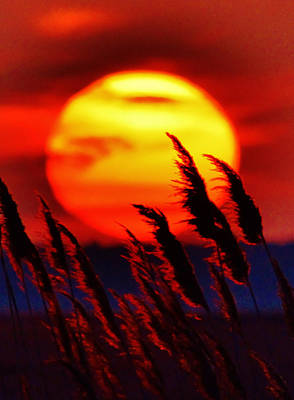 Photograph - Tropic Sunset by William Bartholomew