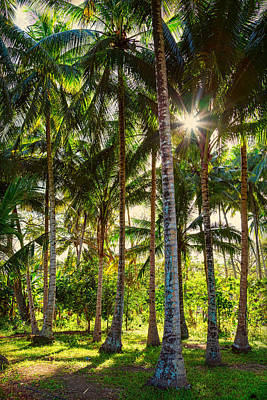 Photograph - Tropic Sunshine by James BO Insogna