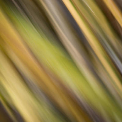 Photograph - Tropical Abstract by James Woody