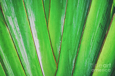 Photograph - Tropical Abstract by Scott Pellegrin