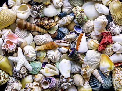 Photograph - Tropical Beach Seashell Treasures 1500a by Ricardos Creations