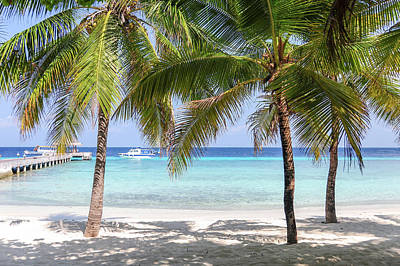 Photograph - Tropical Beach With Palms  by Jenny Rainbow