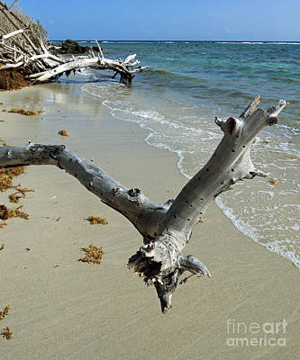 Photograph - Tropical Beached Wood by Mary Haber