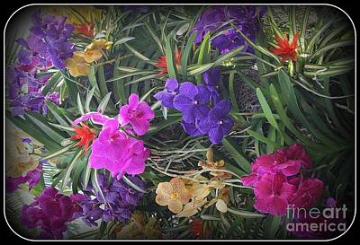Photograph - Tropical Beauties - Orchids by Dora Sofia Caputo Photographic Art and Design
