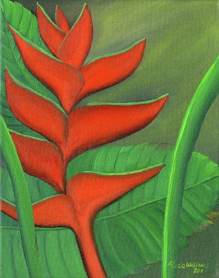 Tropical Beauty - Red And Green Heliconia Art Print by Maria Williams