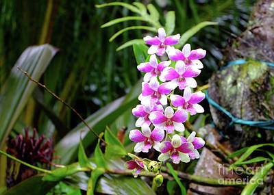 Photograph - Tropical Beauty by Mini Arora
