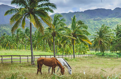 Tropical Photograph - Tropical Bff by Cameron Howard