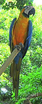 Photograph - Tropical Bird 2 by Randall Weidner
